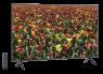 Samsung UN50NU710D thumbnail
