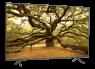Samsung UN65RU7100 thumbnail