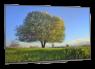 Sony XBR-55A9G thumbnail